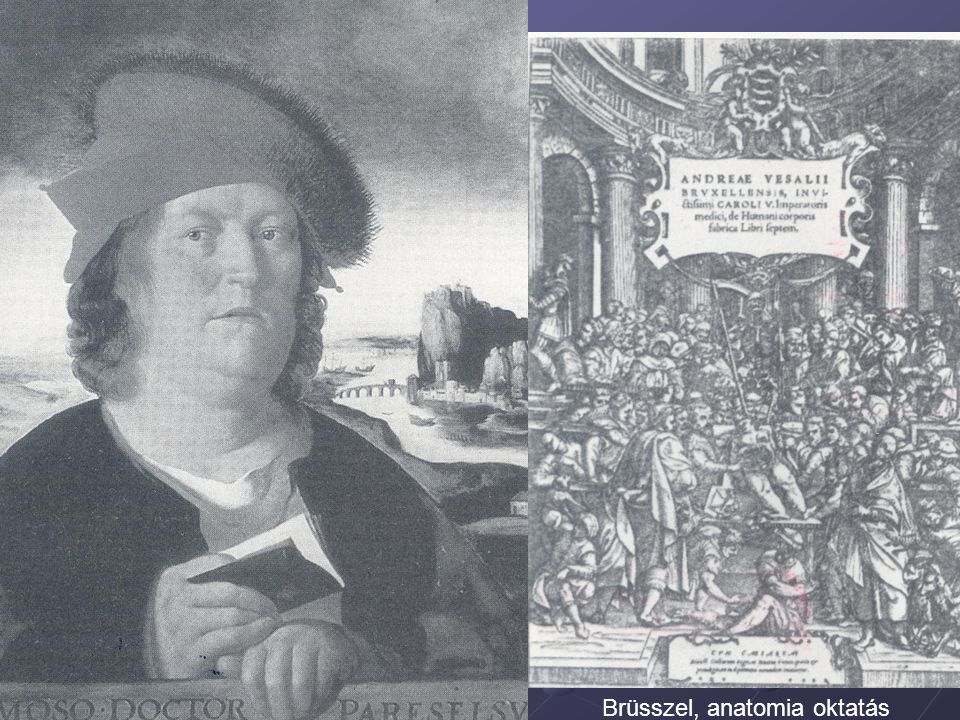Brüsszel, anatomia oktatás