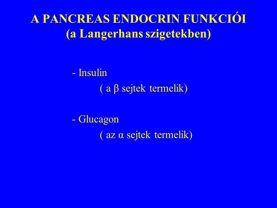 A PANCREAS ENDOCRIN FUNKCIÓI (a Langerhans szigetekben)