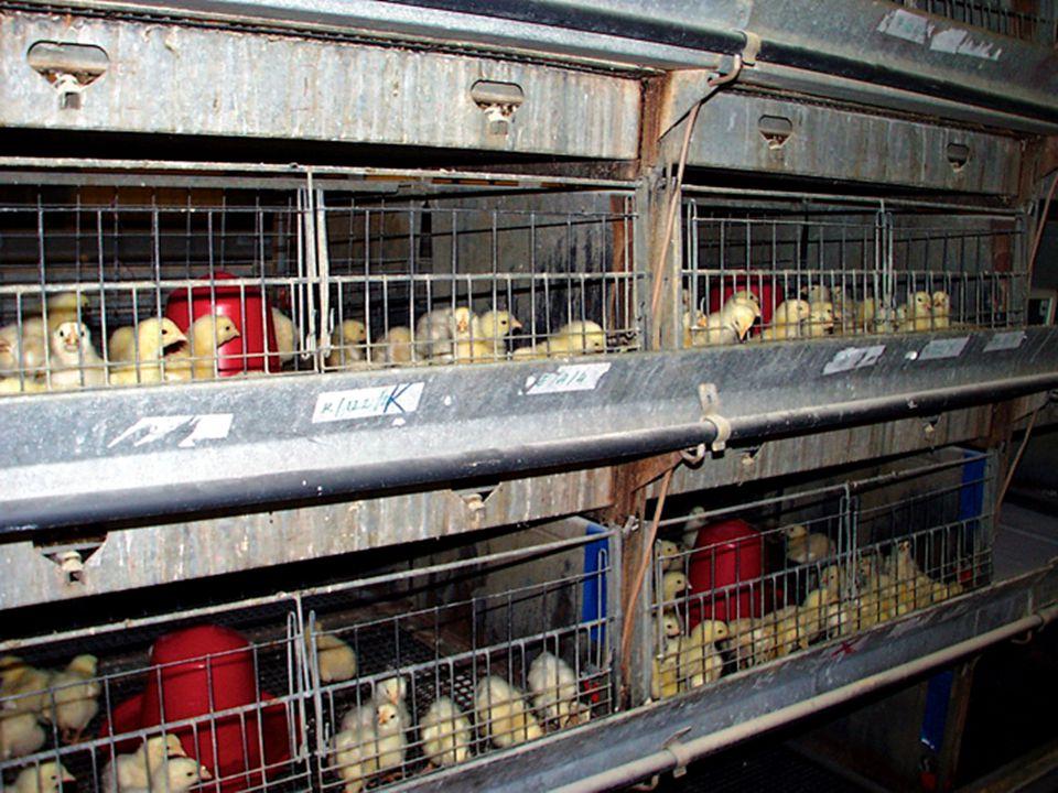 Állattenyésztés és takarmányozás