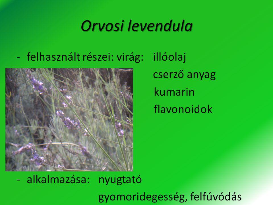 Orvosi levendula felhasznált részei: virág: illóolaj cserző anyag