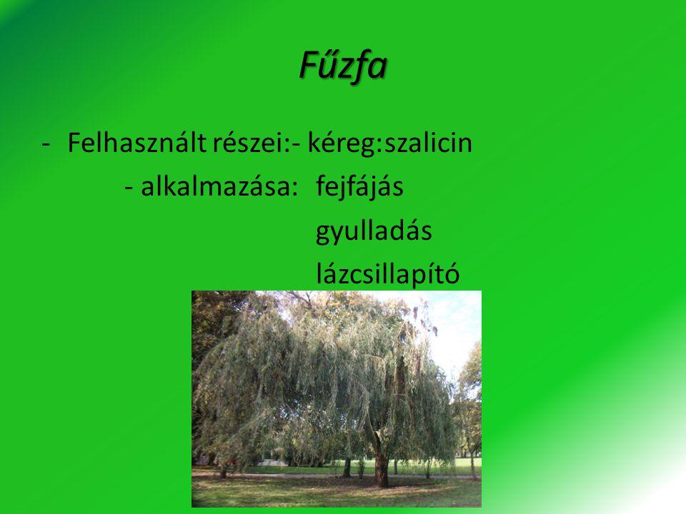 Fűzfa Felhasznált részei:- kéreg: szalicin - alkalmazása: fejfájás