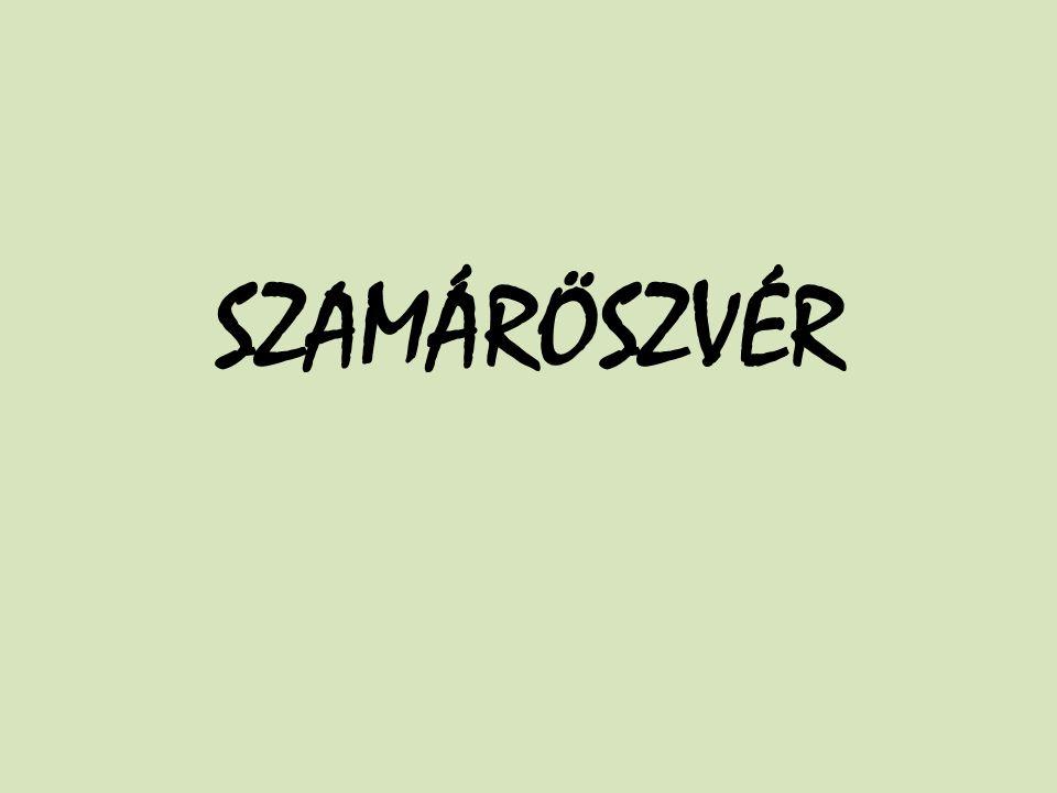 SZAMÁRÖSZVÉR