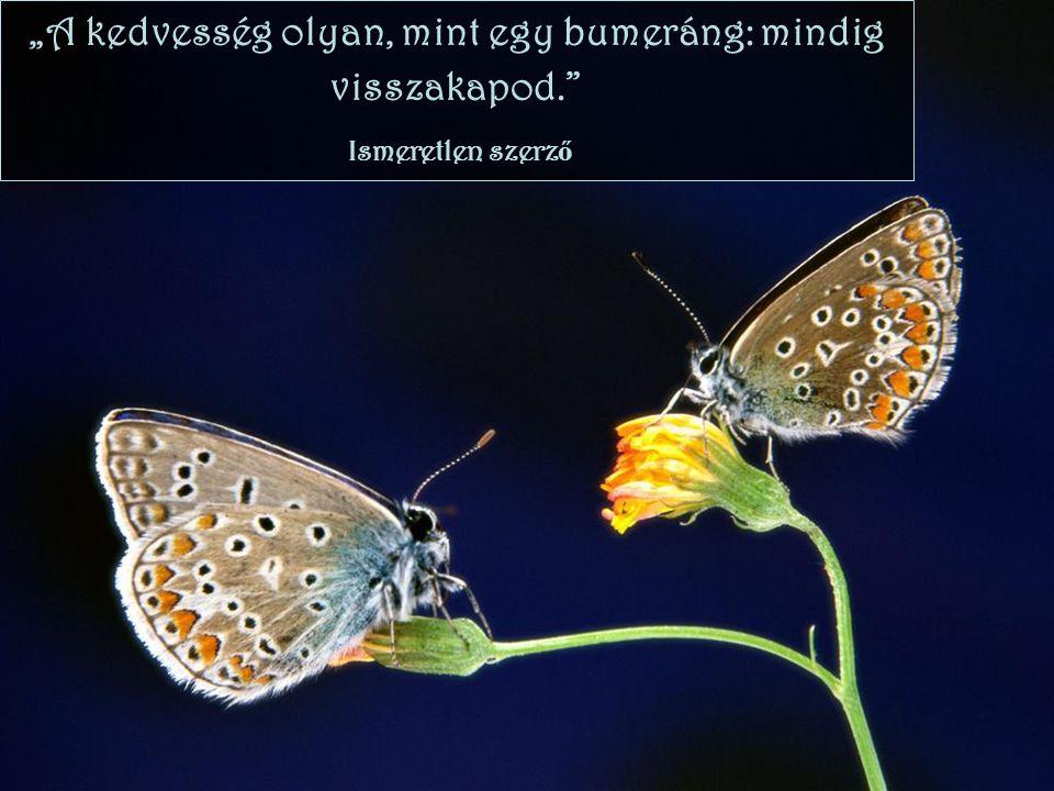 """""""A kedvesség olyan, mint egy bumeráng: mindig visszakapod."""