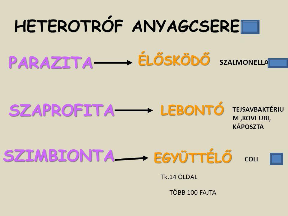 HETEROTRÓF ANYAGCSERE