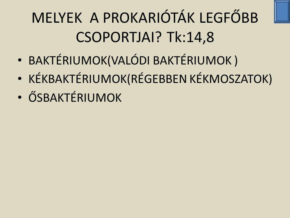 MELYEK A PROKARIÓTÁK LEGFŐBB CSOPORTJAI Tk:14,8