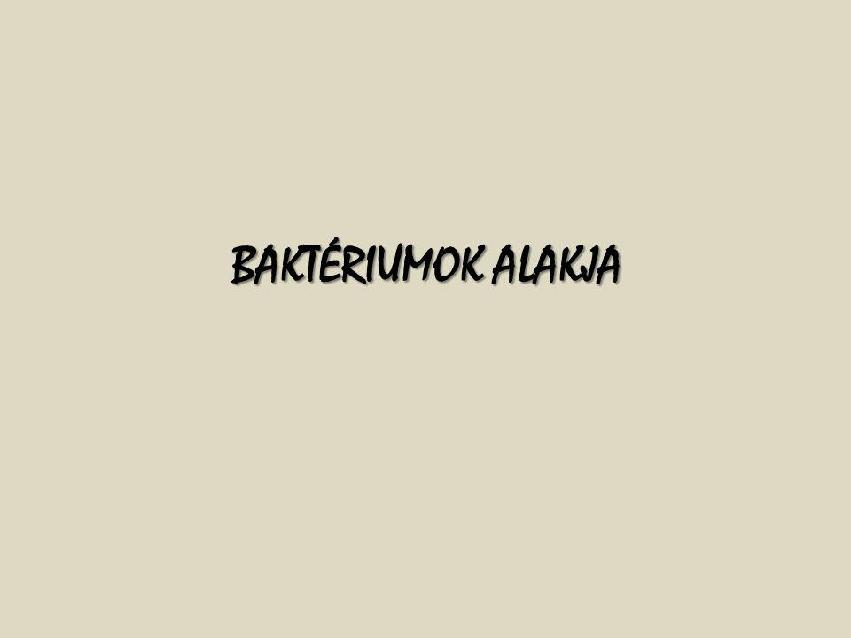 BAKTÉRIUMOK ALAKJA