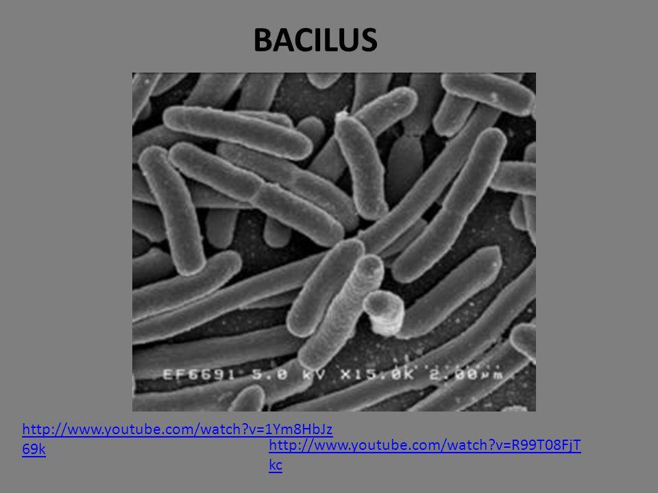 BACILUS http://www.youtube.com/watch v=1Ym8HbJz69k