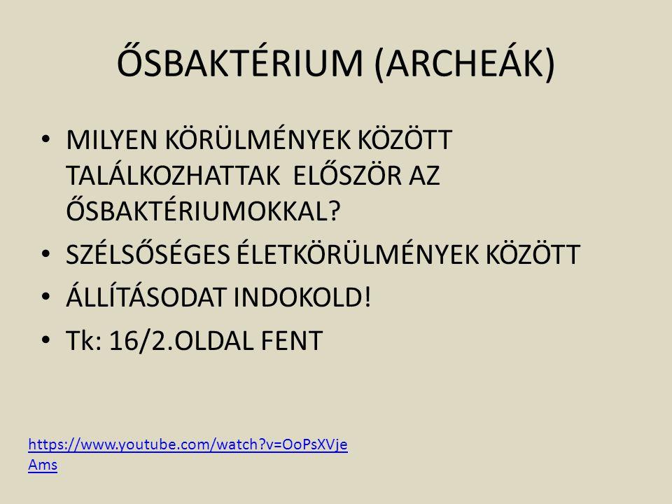 ŐSBAKTÉRIUM (ARCHEÁK)