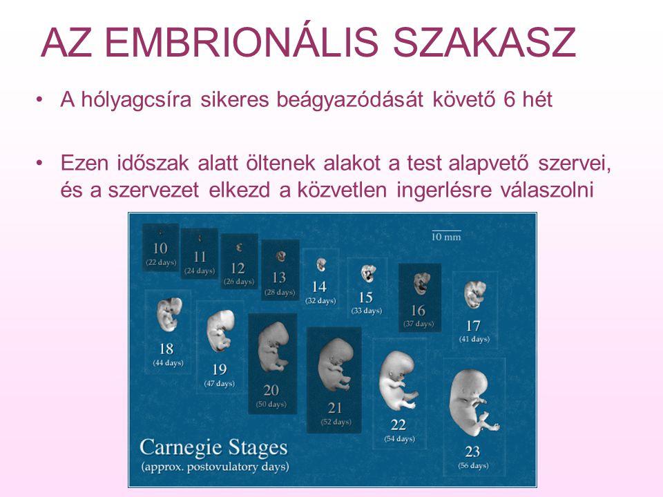 AZ EMBRIONÁLIS SZAKASZ