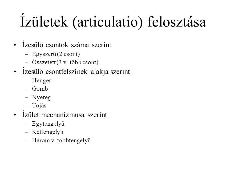 Ízületek (articulatio) felosztása