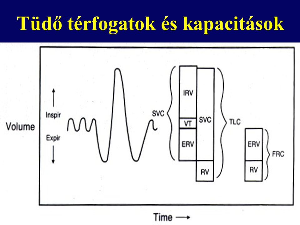 Tüdő térfogatok és kapacitások