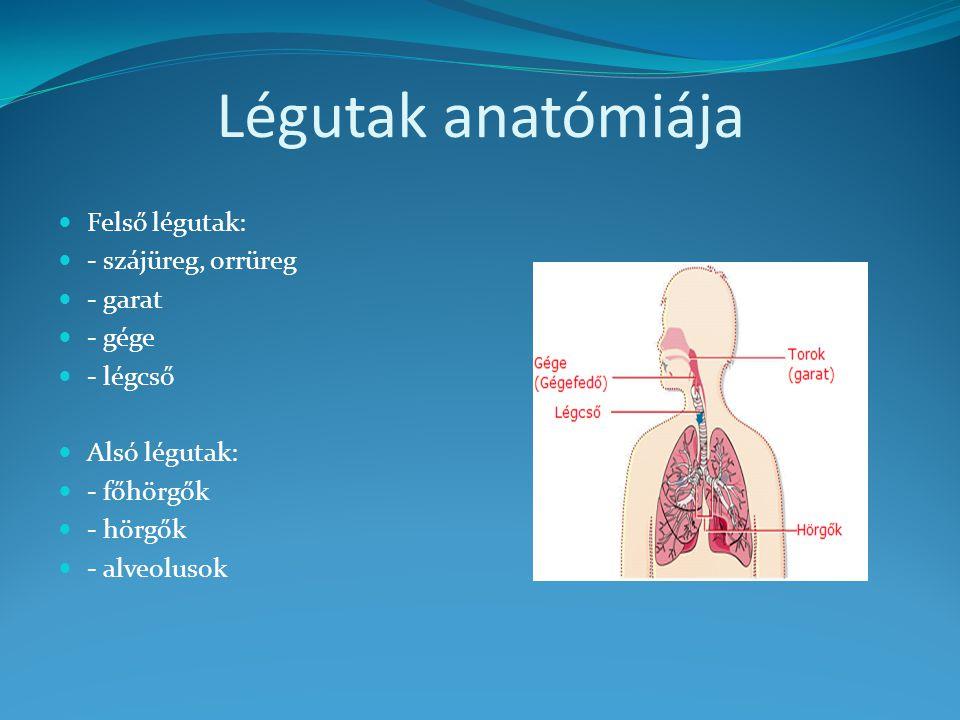 Légutak anatómiája Felső légutak: - szájüreg, orrüreg - garat - gége