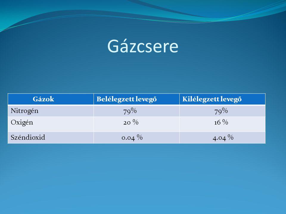 Gázcsere Gázok Belélegzett levegő Kilélegzett levegő Nitrogén 79%