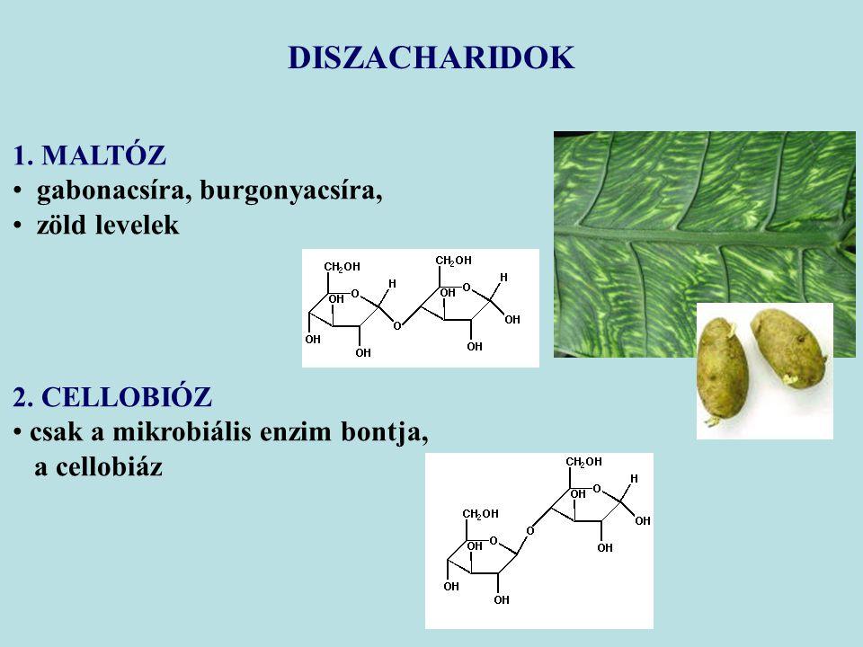 DISZACHARIDOK 1. MALTÓZ gabonacsíra, burgonyacsíra, zöld levelek