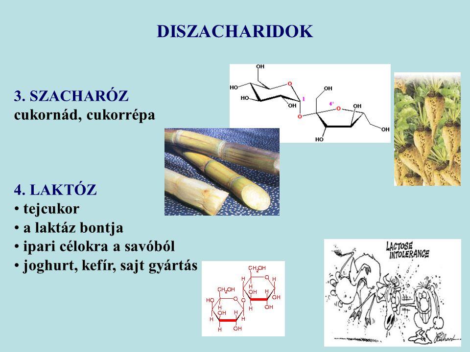 DISZACHARIDOK 3. SZACHARÓZ cukornád, cukorrépa 4. LAKTÓZ tejcukor