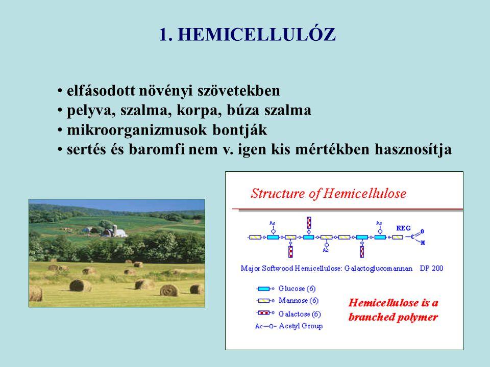 1. HEMICELLULÓZ elfásodott növényi szövetekben
