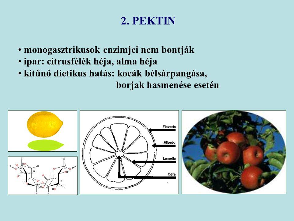 2. PEKTIN monogasztrikusok enzimjei nem bontják