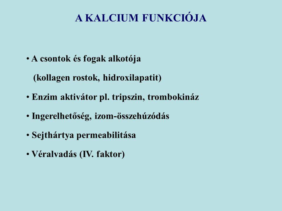 A KALCIUM FUNKCIÓJA A csontok és fogak alkotója