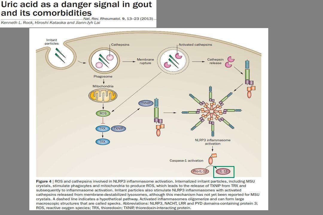 Pathogenezis