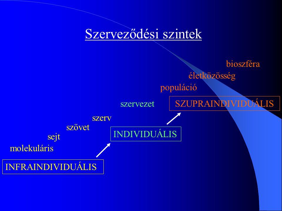 Szerveződési szintek bioszféra életközösség populáció szervezet