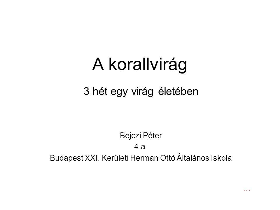 Budapest XXI. Kerületi Herman Ottó Általános Iskola