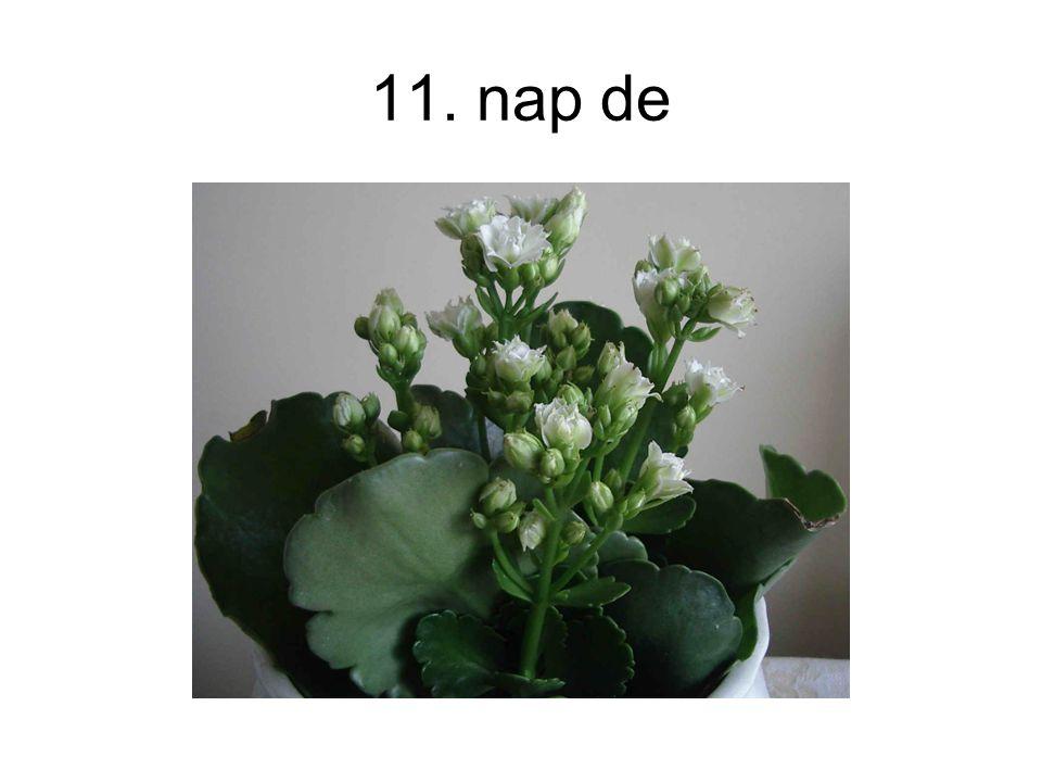 11. nap de