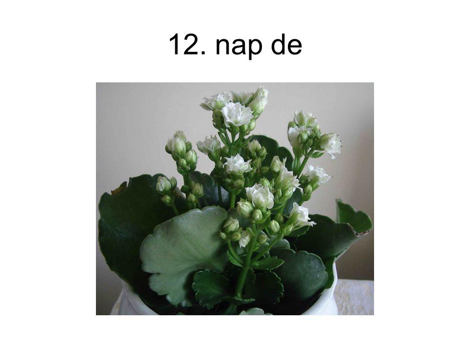 12. nap de