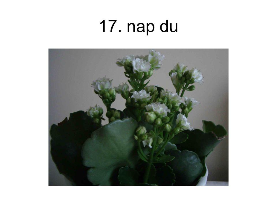 17. nap du