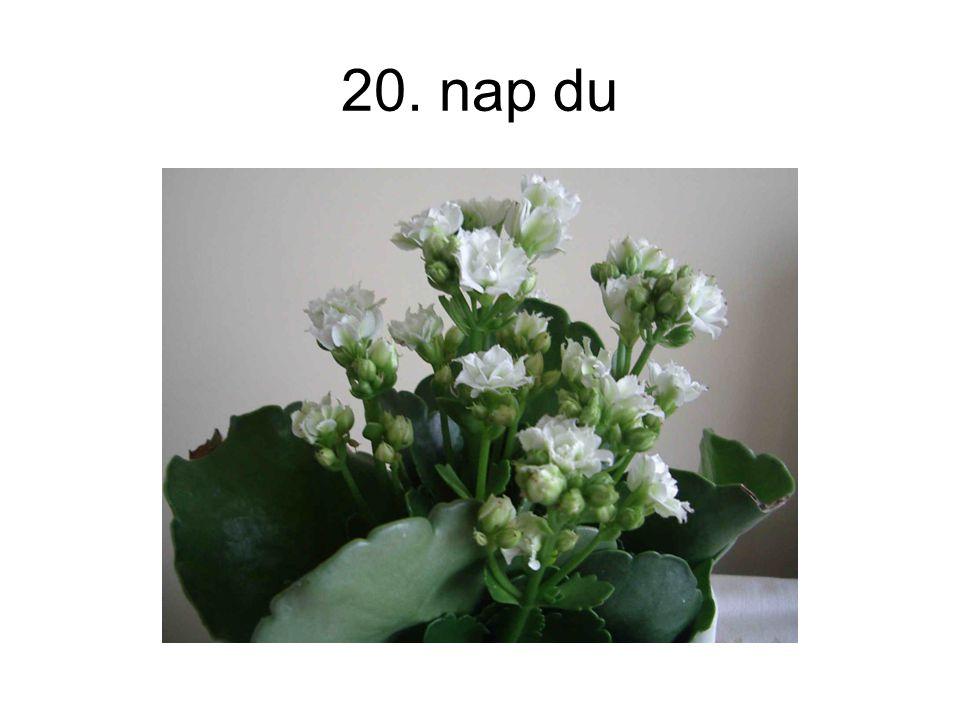 20. nap du
