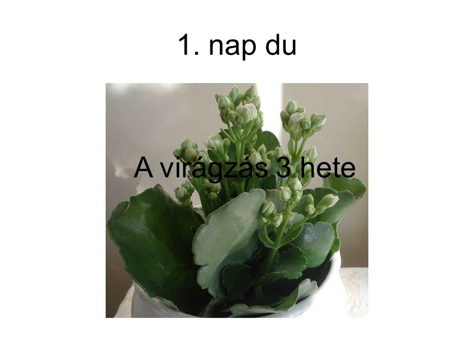 1. nap du A virágzás 3 hete