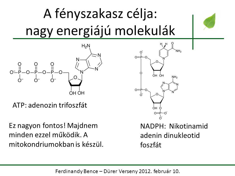 A fényszakasz célja: nagy energiájú molekulák