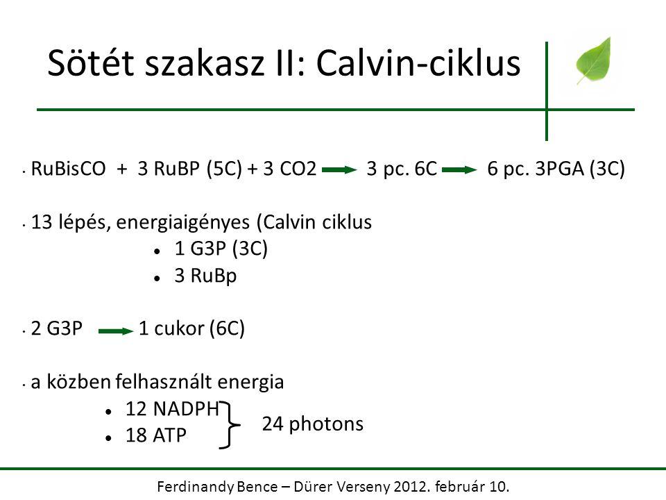 Sötét szakasz II: Calvin-ciklus