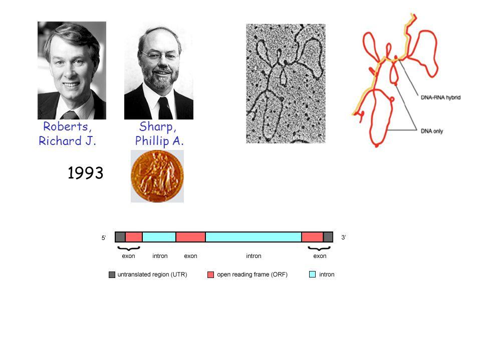 Roberts, Richard J. Sharp, Phillip A. 1993