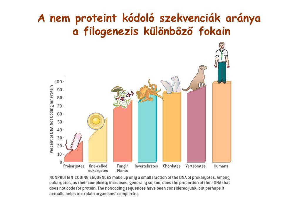 A nem proteint kódoló szekvenciák aránya
