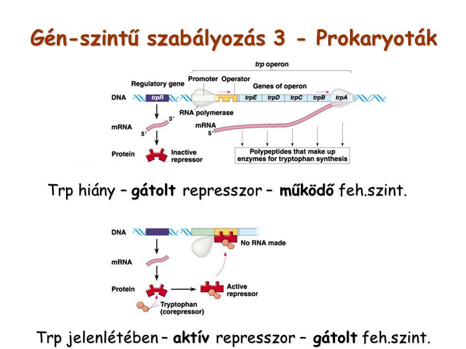 Gén-szintű szabályozás 3 - Prokaryoták