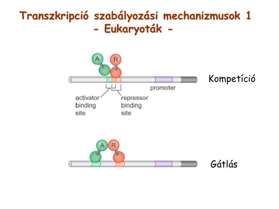 Transzkripció szabályozási mechanizmusok 1