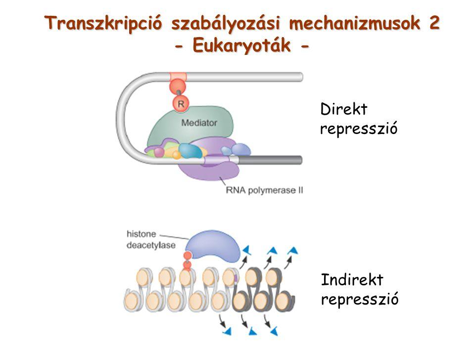 Transzkripció szabályozási mechanizmusok 2