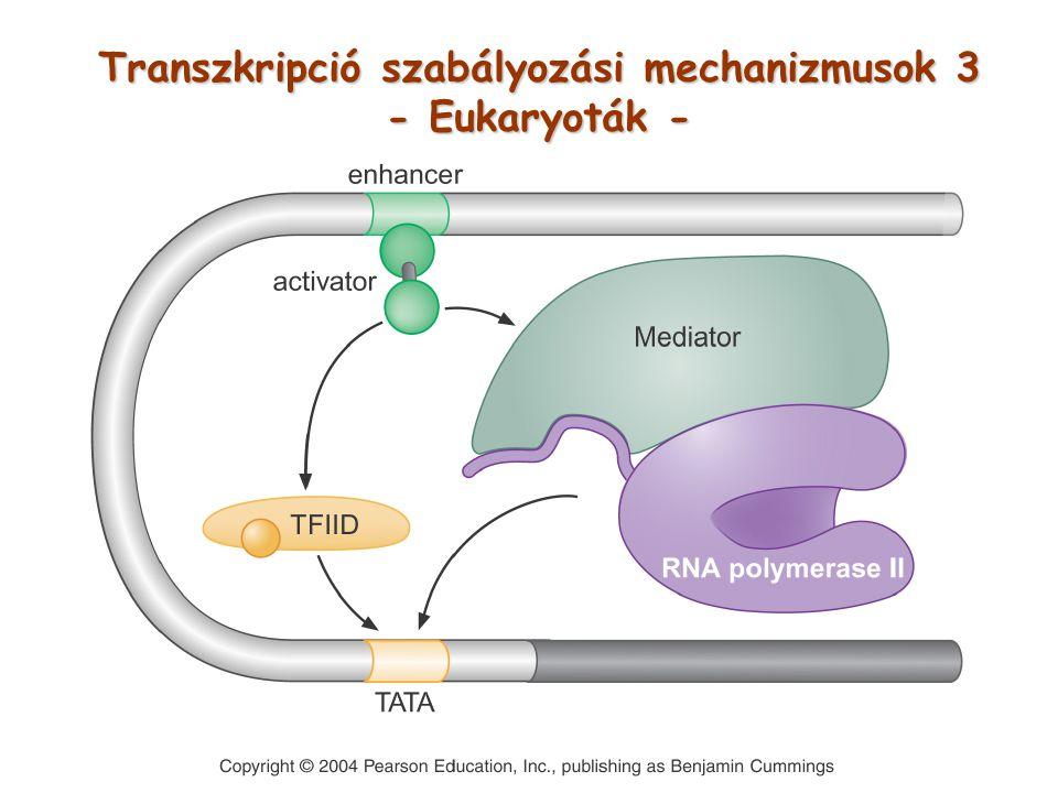 Transzkripció szabályozási mechanizmusok 3