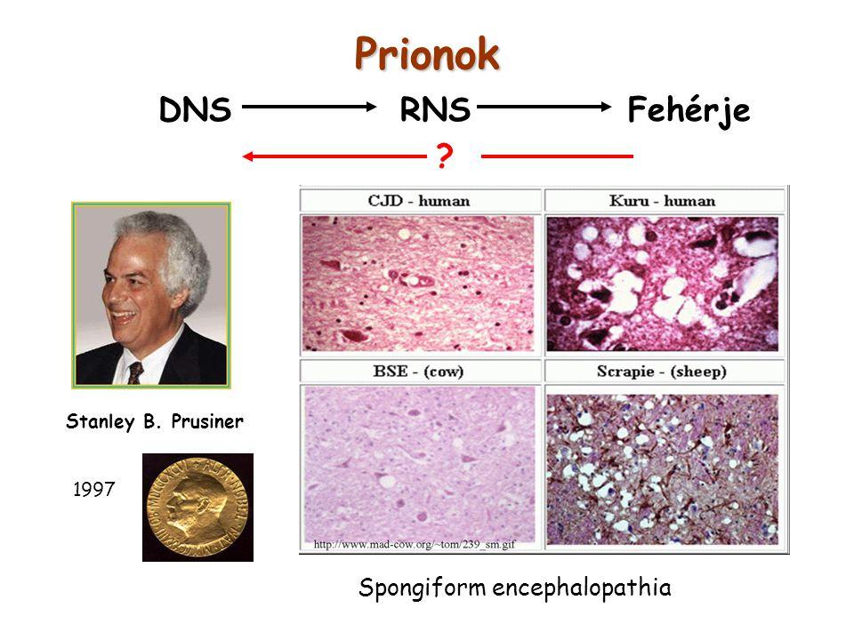 Prionok DNS RNS Fehérje Spongiform encephalopathia