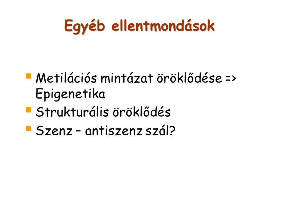 Egyéb ellentmondások Metilációs mintázat öröklődése => Epigenetika