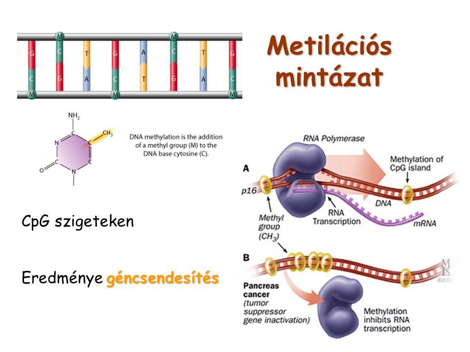 Metilációs mintázat CpG szigeteken Eredménye géncsendesítés