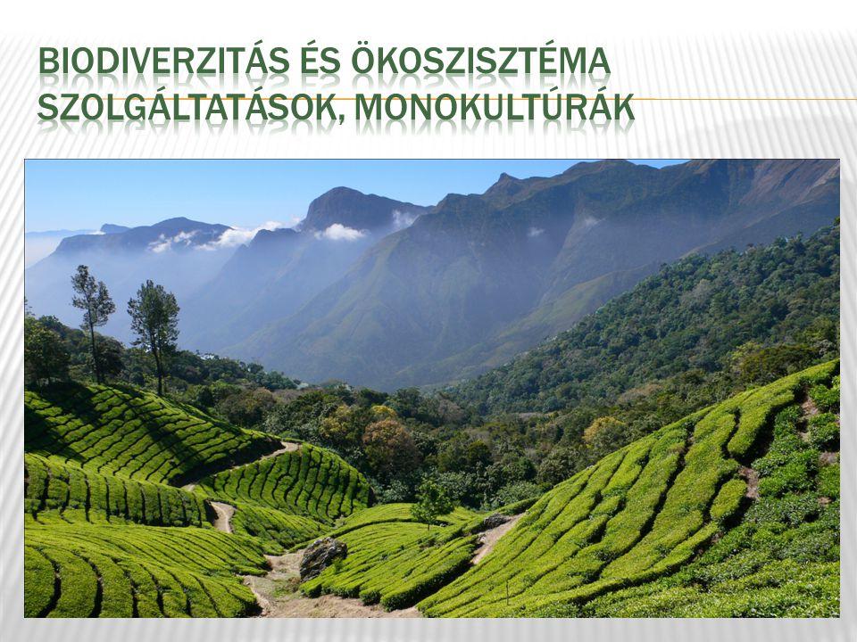 Biodiverzitás és ökoszisztéma szolgáltatások, MONOKULTúRÁK