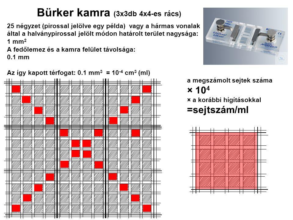 Bürker kamra (3x3db 4x4-es rács)