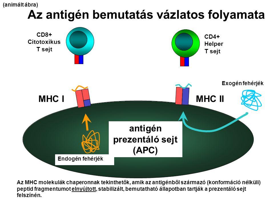 antigén prezentáló sejt (APC)