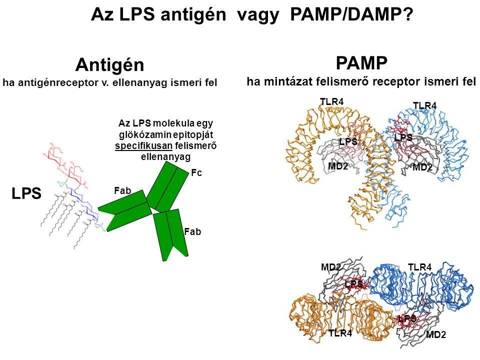 Az LPS antigén vagy PAMP/DAMP
