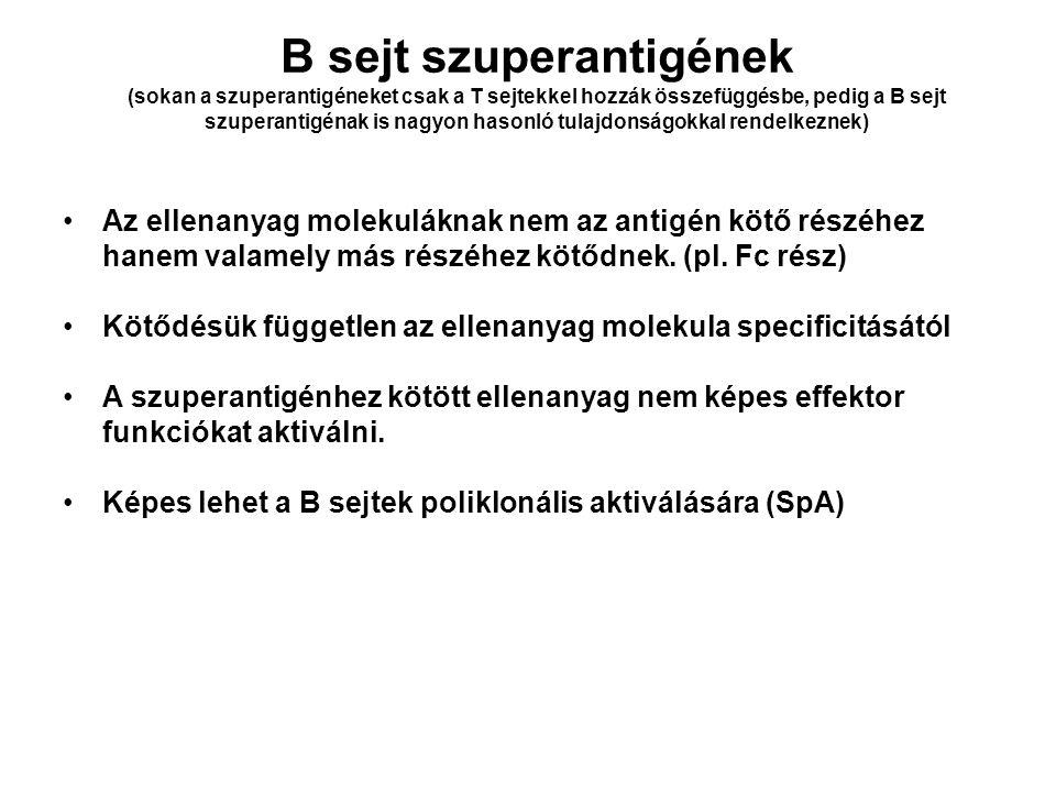 B sejt szuperantigének (sokan a szuperantigéneket csak a T sejtekkel hozzák összefüggésbe, pedig a B sejt szuperantigénak is nagyon hasonló tulajdonságokkal rendelkeznek)