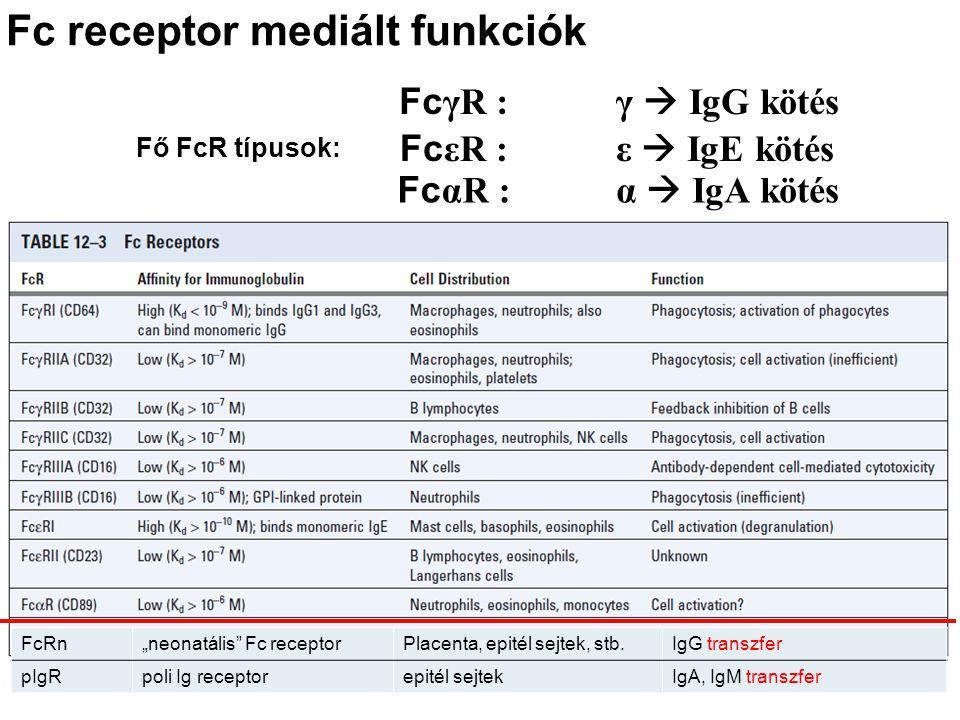 Fc receptor mediált funkciók