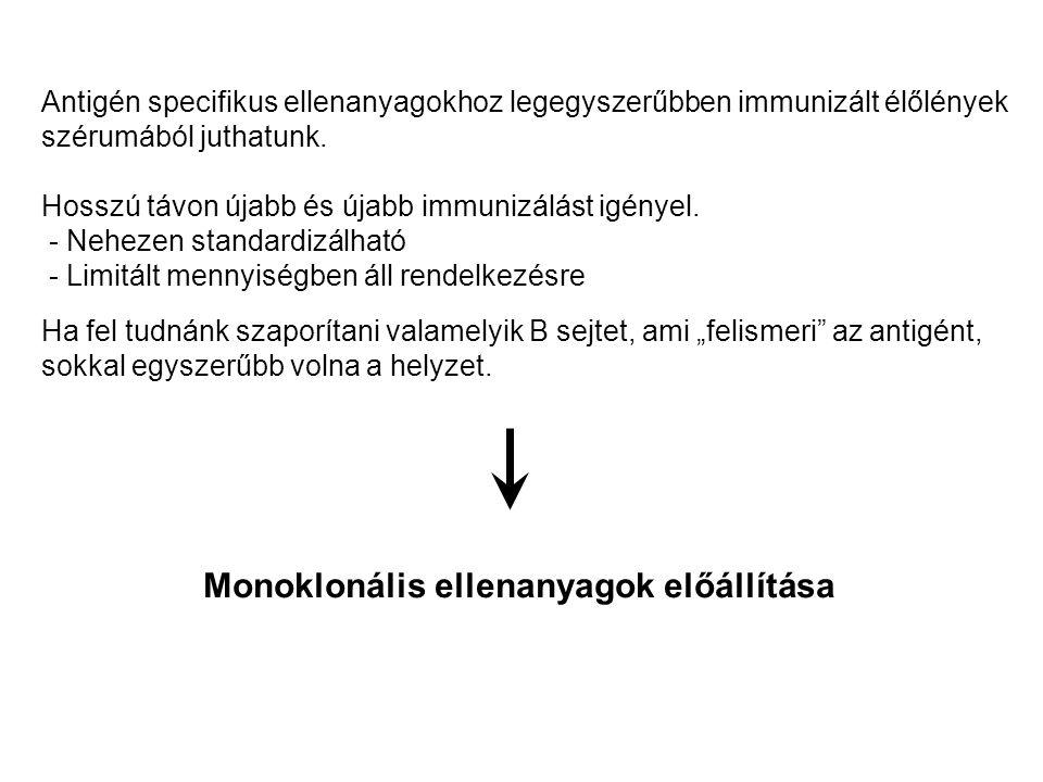 Monoklonális ellenanyagok előállítása