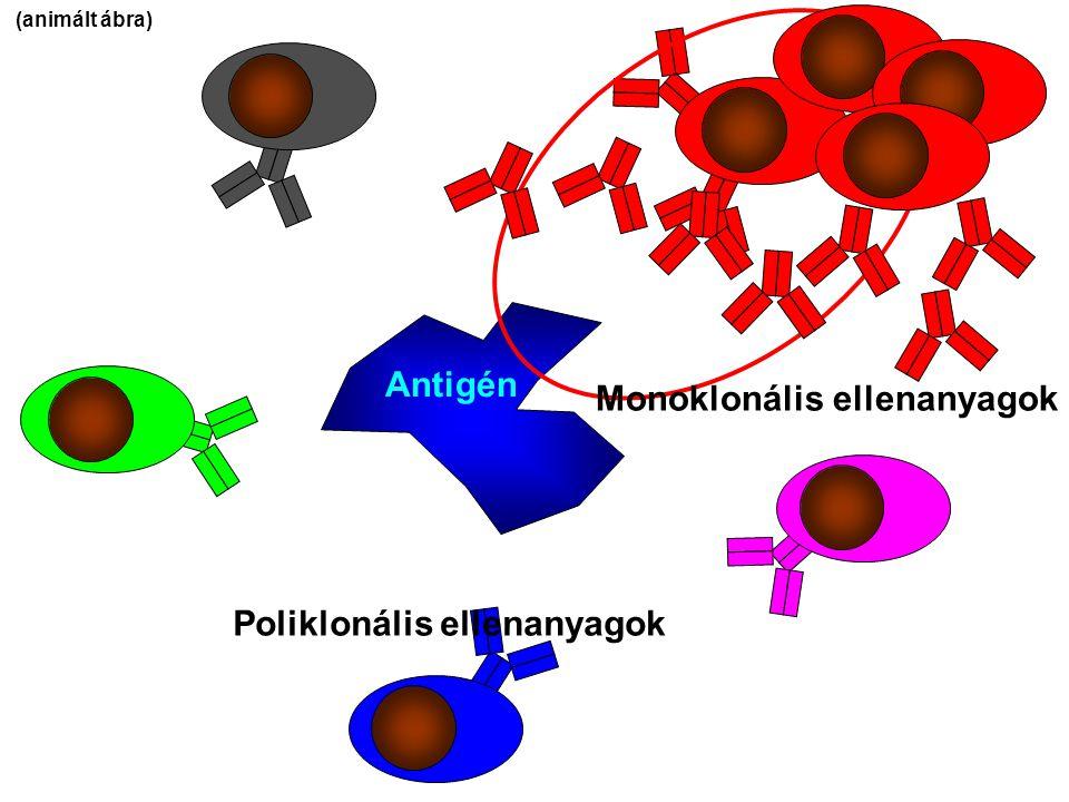 Monoklonális ellenanyagok