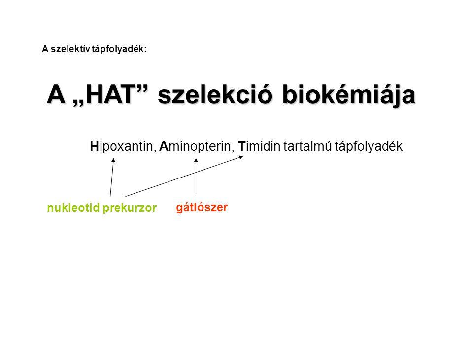 """A """"HAT szelekció biokémiája"""